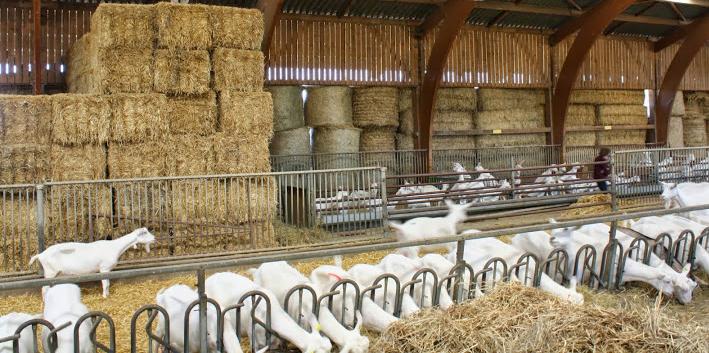 Bâtiment d'élevage
